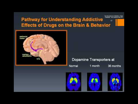 Addiction and the Neuroscience of the Brain, Part 3